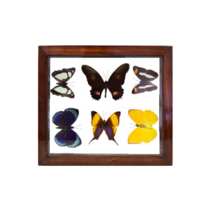 Assorted Butterflies Brown Frame