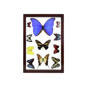 Assorted Butterflies Brown Frame