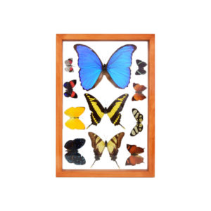 Assorted Butterflies Pine Frame