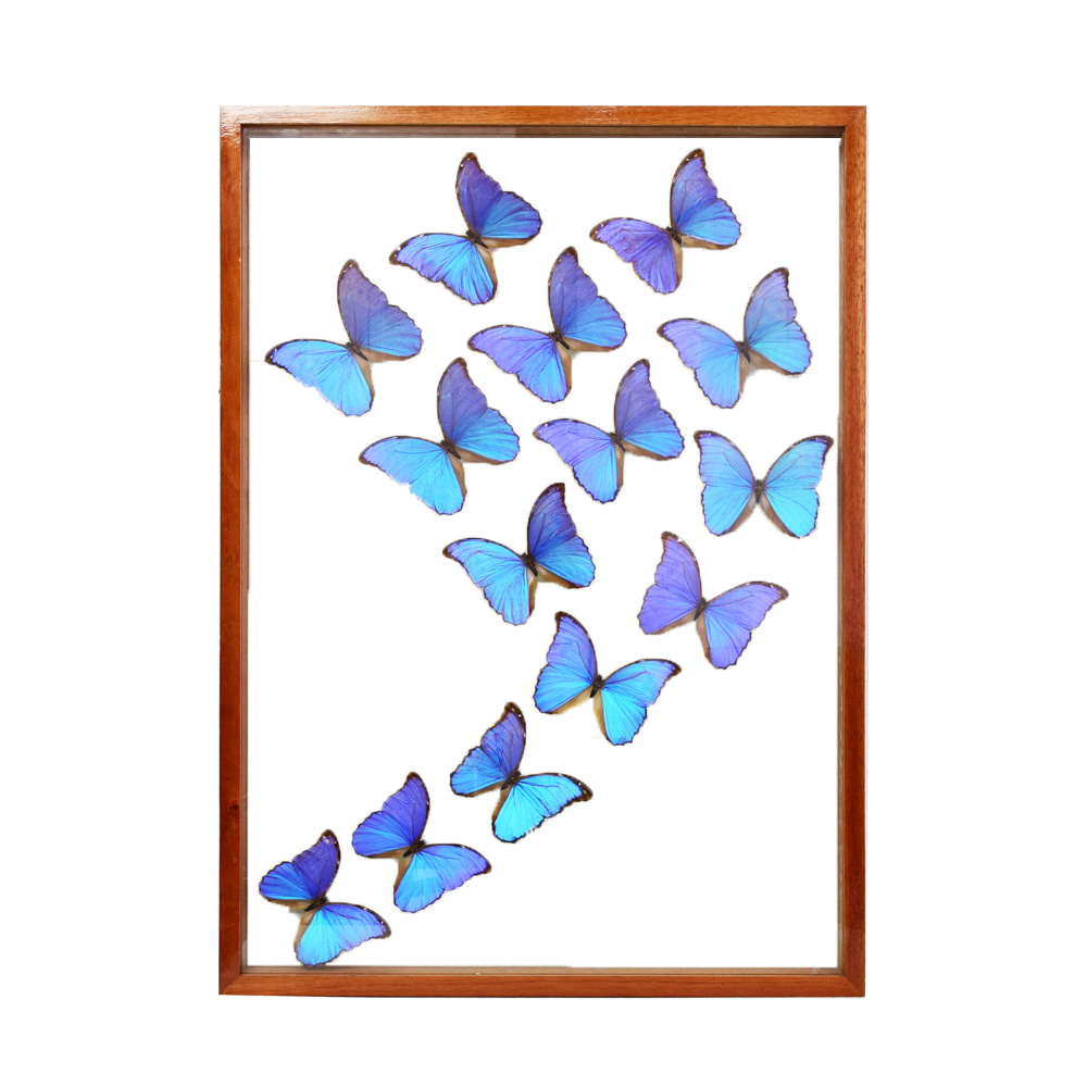 Blue Morpho Butterflies - Art By God Mineral and Nature Novelty Gift ...