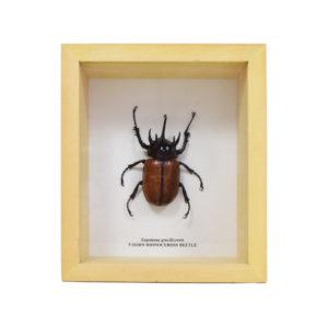 5-horn-beetle