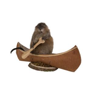 Muskrat in Canoe