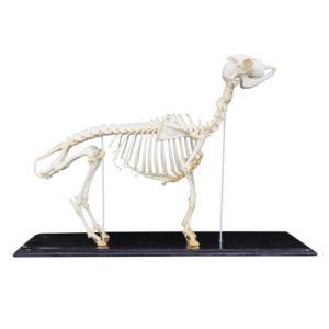 Skulls, Skeletons, Bones