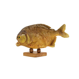 Piranha Taxidermy