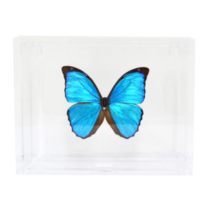 Butterfly Displays-Acrylic Frame