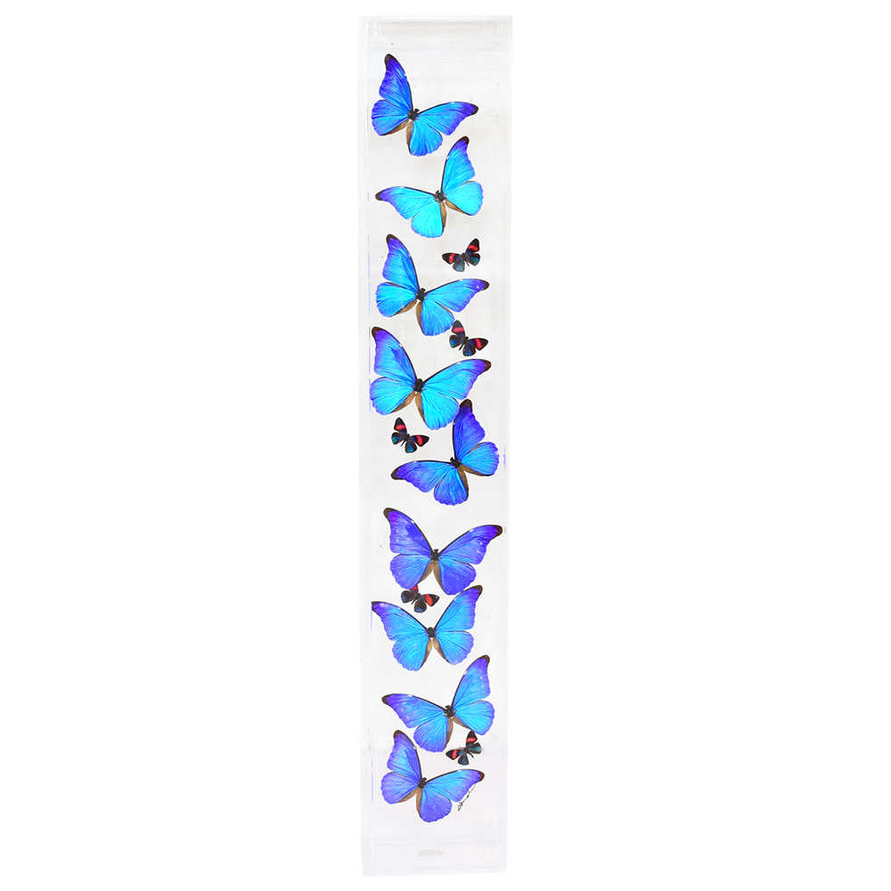 Giant Blue Morpho-9 Butterflies - Art By God Mineral and Nature ...