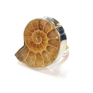 Fossil Jewelry