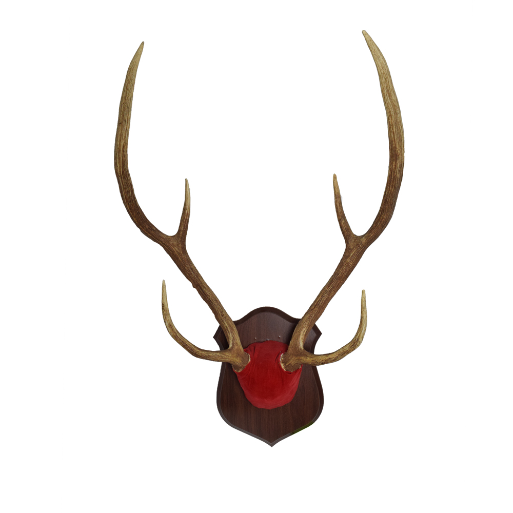 Axis Deer Antlers - Art By God Mineral and Nature Novelty Gift Shop