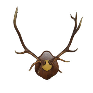 Antlers Wall Art Archives - Art By God Mineral and Nature
