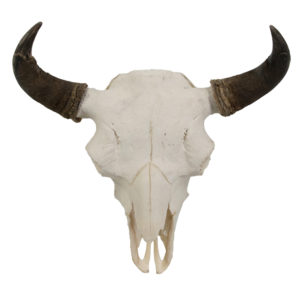 Bison Buffalo Skull Archives Art By God Mineral And