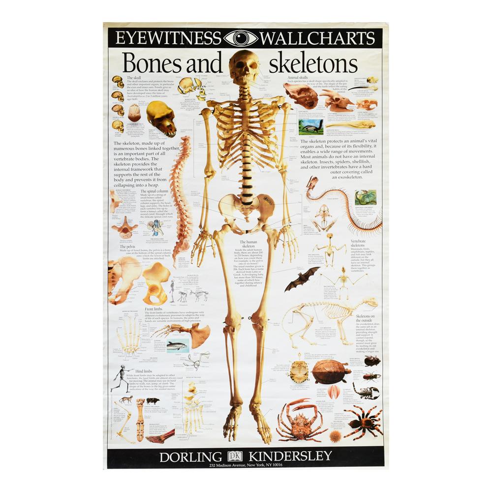 Bones&Skeleton Poster - Art By God Mineral and Nature Novelty Gift Shop